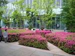 ハルカス16F庭園.JPG